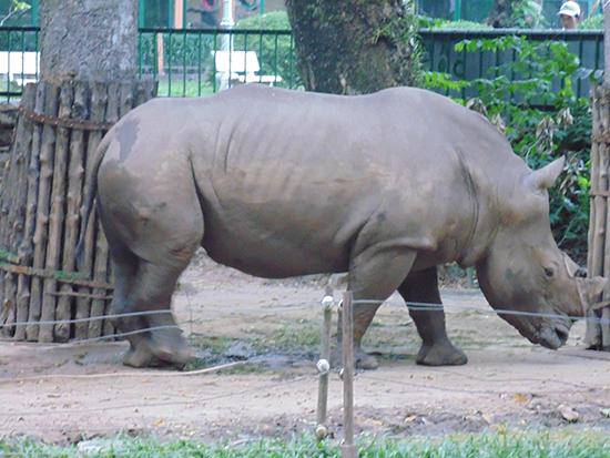 Nạn săn bắn và tiêu thụ sừng tê giác tại Nam Phi đã giảm năm thứ 2 liên tiếp