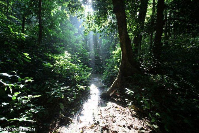Rừng Việt Nam trên đà phục hồi nhưng nạn phá rừng vẫn tiếp diễn