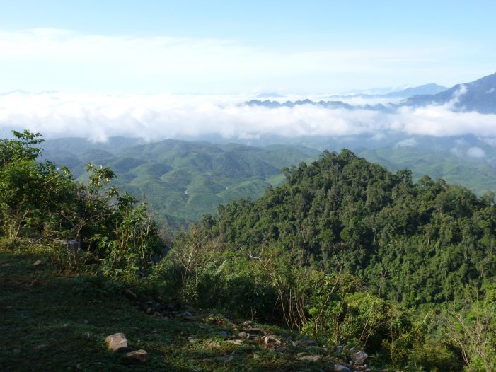 Chính sách phát triển rừng trồng gỗ lớn: Thách thức và khuyến nghị