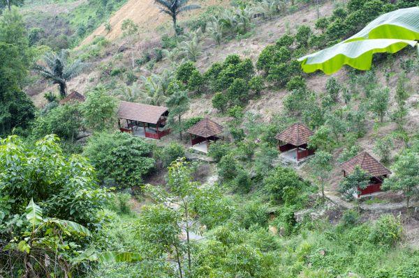 Quản lý rừng cộng đồng thôn bản: Một số bất cập và đề xuất điều chỉnh