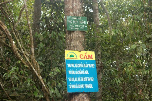 Chính sách giao khoán bảo vệ rừng: Hiệu quả không như kỳ vọng