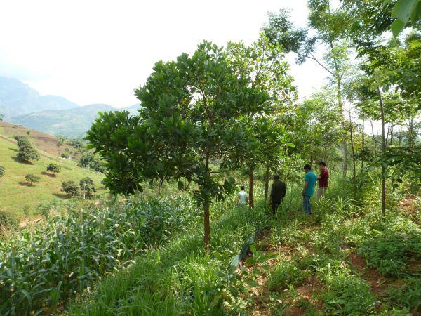 Sắp xếp, đổi mới công ty nông lâm nghiệp: Thiếu vắng vai trò giám sát của các tổ chức xã hội và cộng đồng