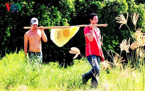 Cà Mau buộc di dời đàn ong ngoại