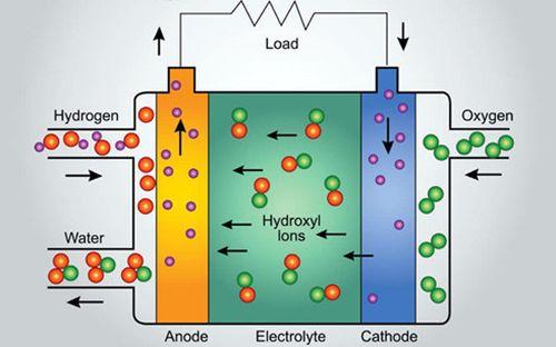 Pin điện thoại sẽ được sản xuất từ tảo biển?