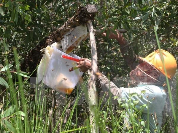Ong lạ tại Vườn quốc gia U Minh Hạ: Gây nuôi thử nghiệm hợp pháp