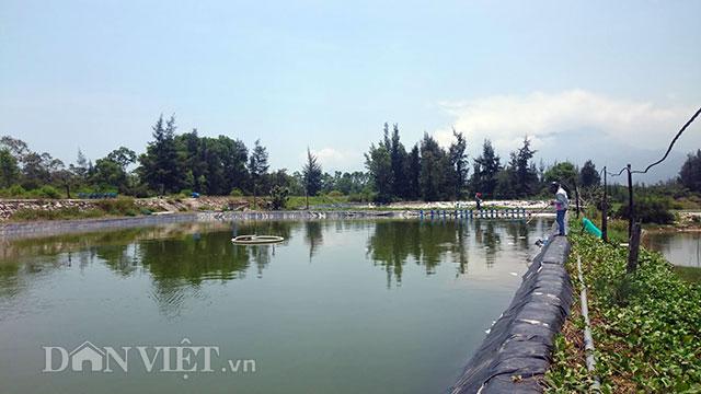 """Thừa Thiên-Huế: Vịnh đẹp thế giới """"chết"""" vì dân nuôi tôm trái phép"""