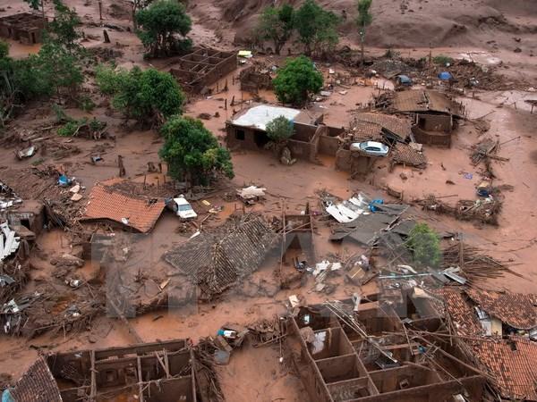 Samarco cam kết trồng rừng lớn gấp 21 lần diện tích bị hủy hoại