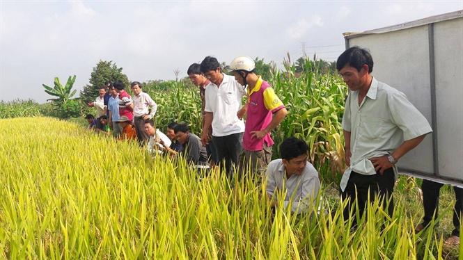 Để nông dân thích ứng biến đổi khí hậu