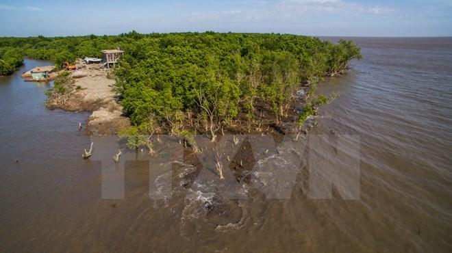 Điều tra các đối tượng hung hãn phá rừng phòng hộ ở Cà Mau