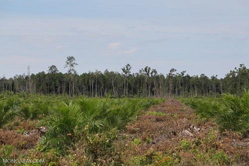 Các khu bảo tồn phát thải lượng lớn carbon do mất rừng
