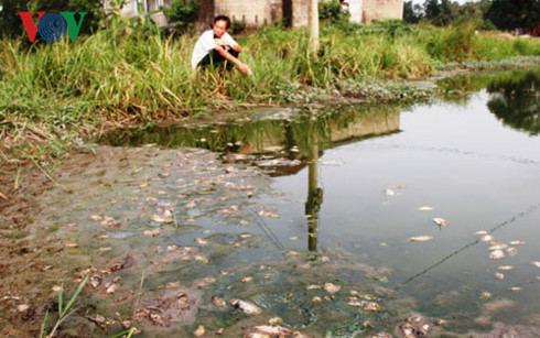 Quảng Trị: Cá chết hàng loạt gần khu công nghiệp Quán Ngang