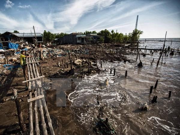 Cà Mau mất 450 ha đất ven biển mỗi năm do biến đổi khí hậu