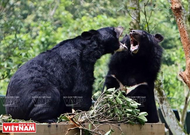Ngôi nhà mới giúp bảo tồn loài gấu đang có nguy cơ bị tuyệt chủng