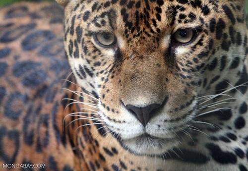 Nguy cơ tuyệt chủng hàng trăm ngàn loài nhiệt đới do phá rừng