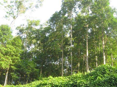 Công bố hiện trạng rừng toàn quốc năm 2016