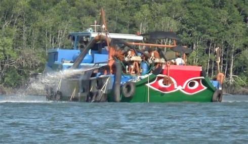 Vụ rừng Sác Cần Giờ bị xâm hại: Cục Hàng hải sẽ xử lý nghiêm vi phạm