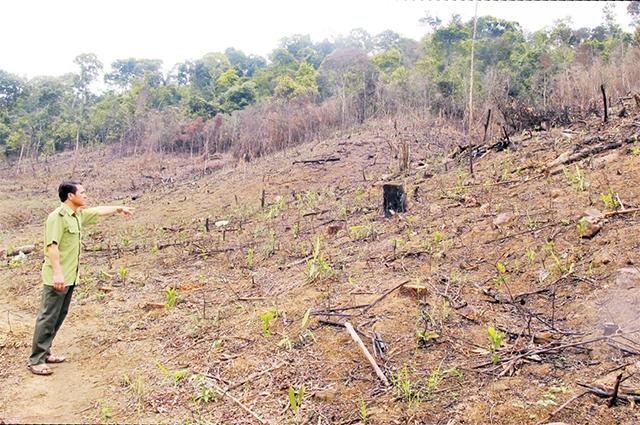 Báo động nạn phá rừng ở Bắc Giang