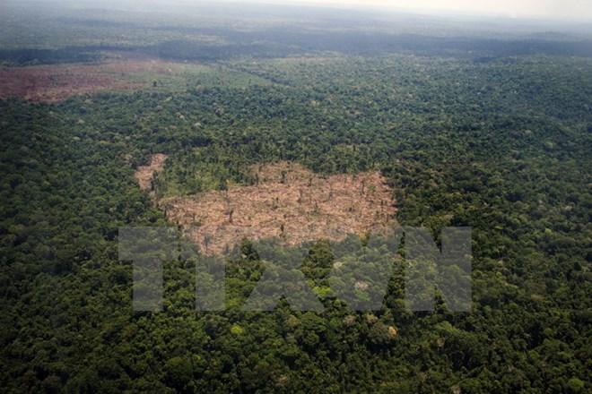 Báo động tình trạng phá rừng nhiệt đới bờ biển Đại Tây Dương Brazil