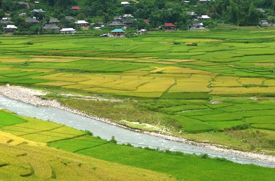 Nguyên tắc chuyển đổi đất lúa sang trồng cây lâu năm