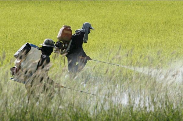 Công ty Thụy Sĩ bán thuốc diệt cỏ độc hại sang nhiều nước châu Á
