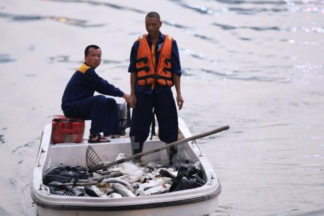 Tròn một năm sau sự cố, cá lại chết trắng hồ Hoàng Cầu