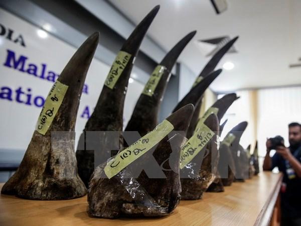 Nam Phi bắt giữ một công dân Việt Nam mang gần 30kg sừng tê giác
