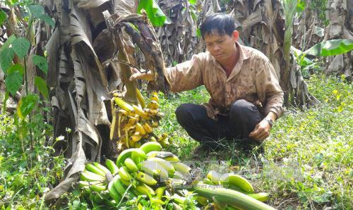 """Để nông sản Việt thoát vòng luẩn quẩn """"được mùa, mất giá"""""""