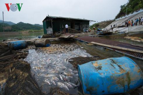 Thủy điện Tuyên Quang xả lũ, 30 tấn cá bị cuốn trôi