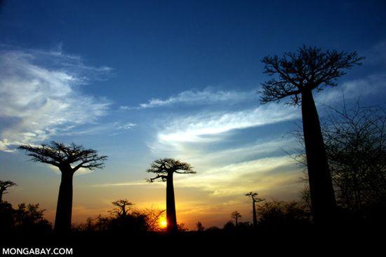 Diện tích rừng ở các vùng khô cằn cao hơn dự tính