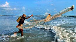 Tìm giải pháp năng lượng bền vững cho ngành gỗ và thủy sản ở Việt Nam