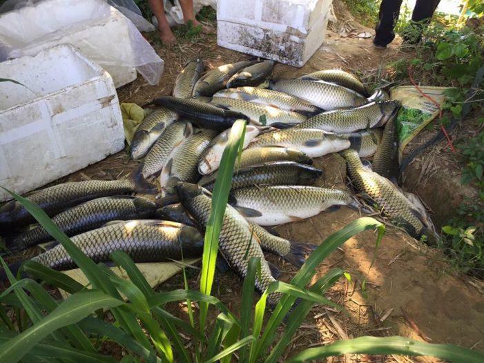 Hàng tấn cá lồng bỗng chết ở Huế
