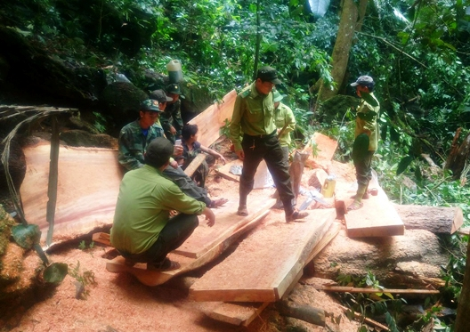 Truy bắt nhóm người xẻ gỗ tại rừng di sản Phong Nha – Kẻ Bàng