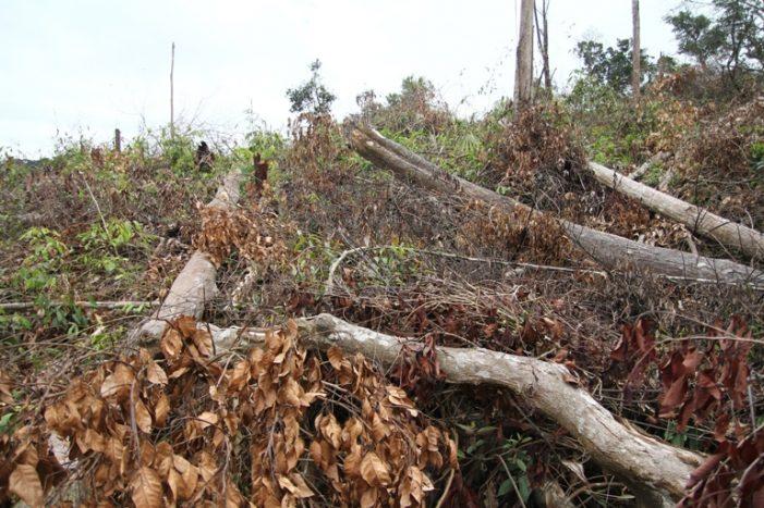 Khởi tố 4 đối tượng phá rừng quy mô lớn ở Lâm Đồng