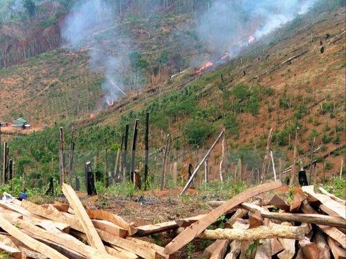 Khởi tố 4 bị can phá rừng thuê với quy mô lớn tại Lâm Đồng