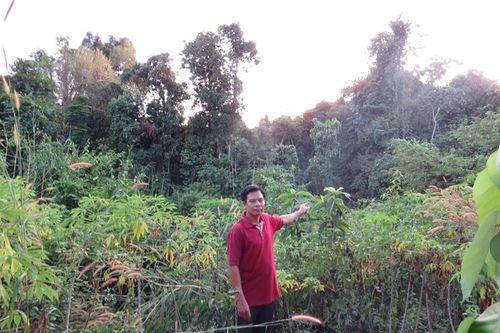 Bình Phước: Xin dự án trồng rừng, để cá nhân trục lợi
