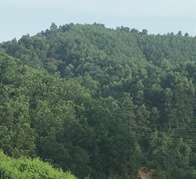 2018: Nâng độ che phủ rừng lên 41,6%