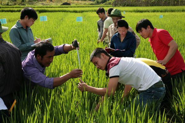 Cải thiện công tác khuyến nông nhằm thúc đẩy sản xuất nông nghiệp bền vững