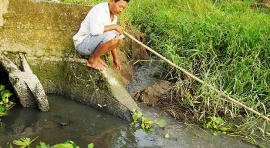 Nông dân không dám sản xuất vì nhiều tuyến kênh gần khu công nghiệp bị ô nhiễm