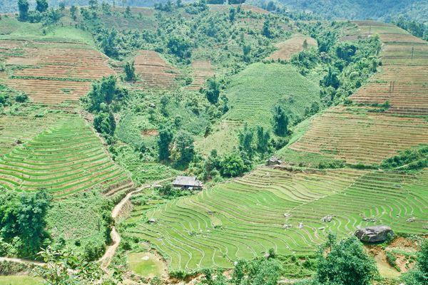 Tái cơ cấu nông nghiệp Tây Bắc: Thực trạng và giải pháp