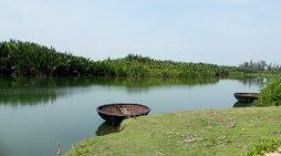 Phá 50ha rừng dừa cho nhà máy giấy theo chỉ đạo UBND tỉnh Quảng Ngãi