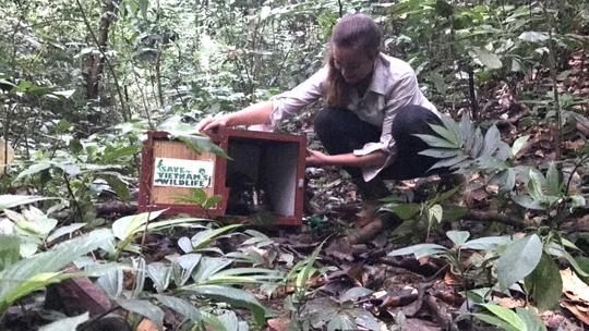 Thả 10 cá thể cầy quý hiếm về rừng