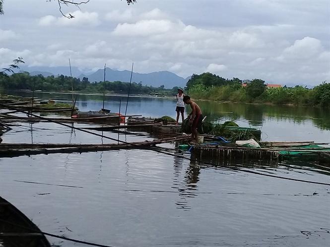 Cá lồng trên sông Bồ lại chết chưa rõ nguyên nhân