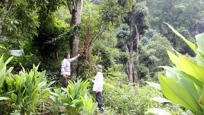 Phát huy giá trị các khu bảo tồn thiên nhiên