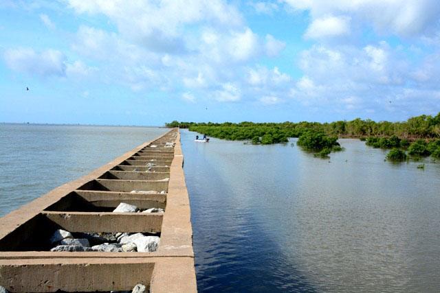 Cà Mau cần khoảng 1.300 tỷ đồng để đầu tư các công trình chống sạt lở ven biển