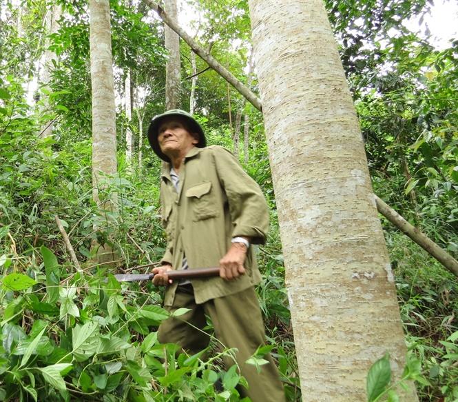 30 năm cần mẫn trồng hàng chục hécta rừng gỗ quý