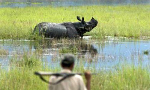 Buôn bán động vật hoang dã vẫn nhức nhối ở Ấn Độ