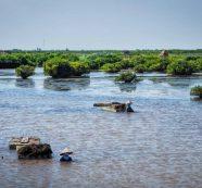 Nghị định về đất ngập nước: Nâng cao năng lực bảo tồn