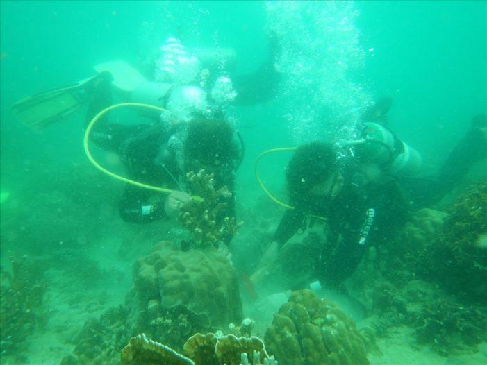 Nha Trang: Phục hồi rạn san hô gãy, vỡ do bão gây ra