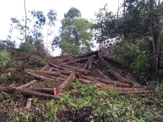 Gần 21,2 tỷ đồng đầu tư phát triển rừng phòng hộ