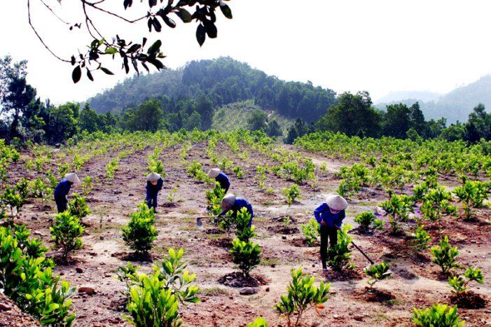 Trồng rừng thay thế ít nhất bằng diện tích rừng chuyển mục đích